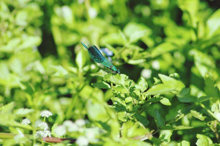 Libellule Nature Photography