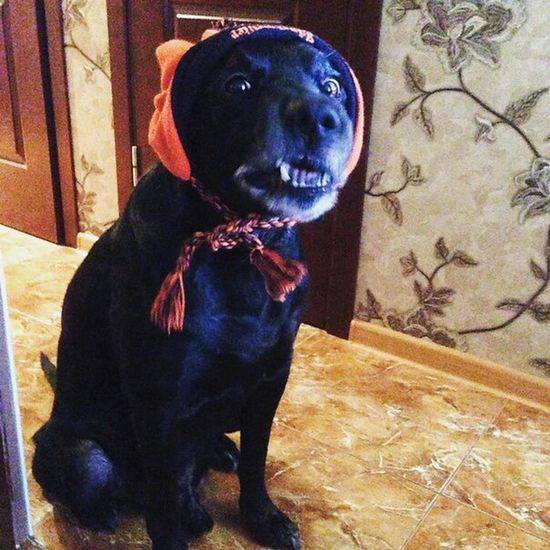 Dog❤ I Love My Dog❤ My Dog Is Cooler Than Your Kids What Did You Say!? Когда хозяин...😄👍👌🐶