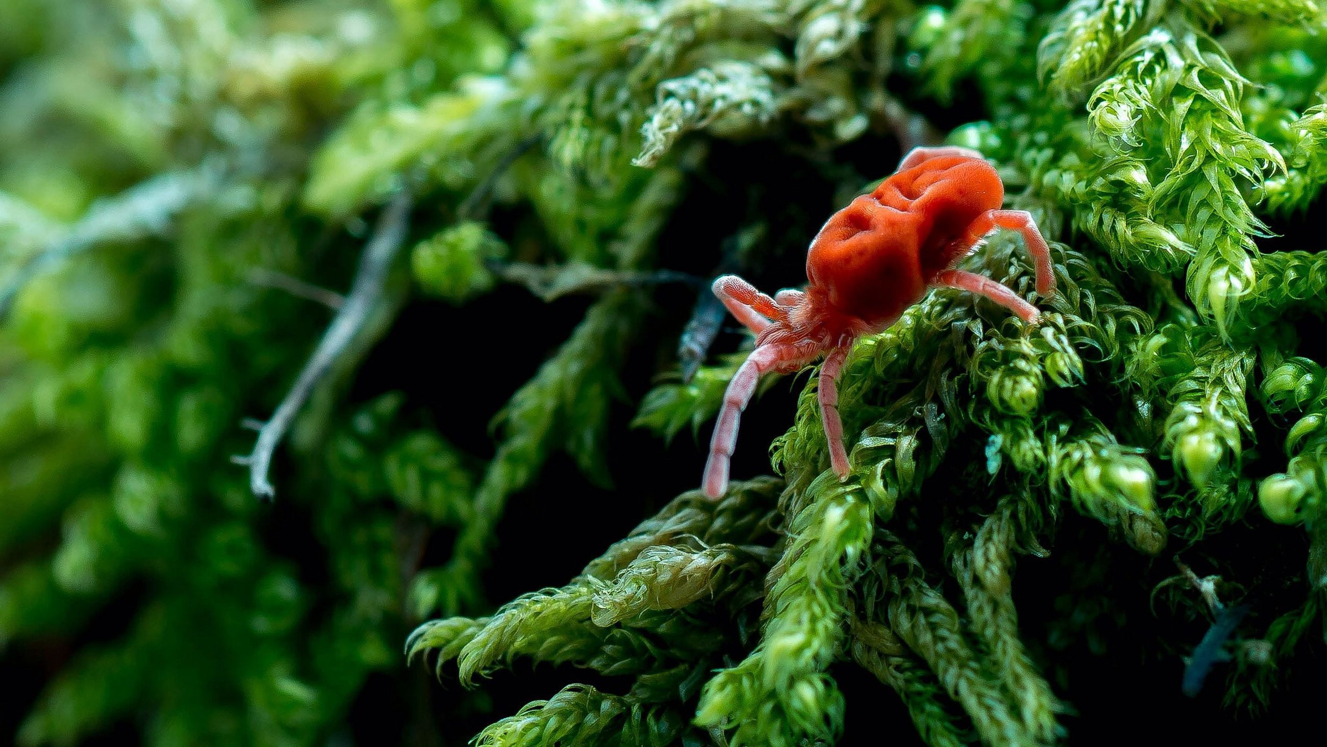 growth, freshness, close-up, plant, nature, focus on foreground, beauty in nature, green color, flower, leaf, red, fragility, growing, day, selective focus, outdoors, bud, no people, tree, stem