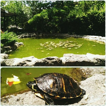 Turtle Natural Beauty Turkey Ankara Ilef Iletisimfakultesi