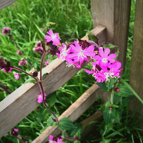 Wildlife is beautiful 🌸🌺🌷 Wildlife Nature Beautiful Flowers #spring