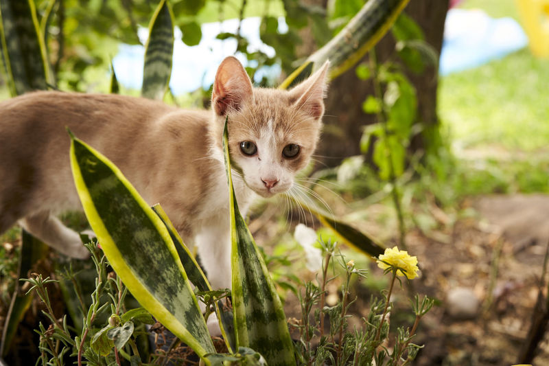 Portrait of kitten in a field