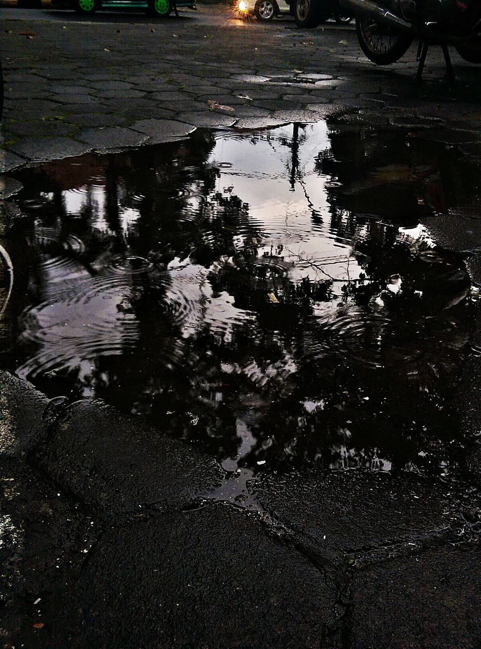 water, reflection, puddle, nature, no people, outdoors, floating on water, day, growth, tree, beauty in nature, close-up