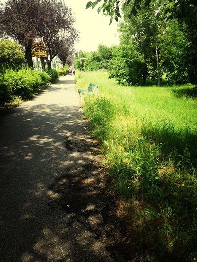 I'm posting it while walkin back home from school LOL LLa SbattauUccidetemiè una vita che non torno a casa a piedi !! Connected With Nature