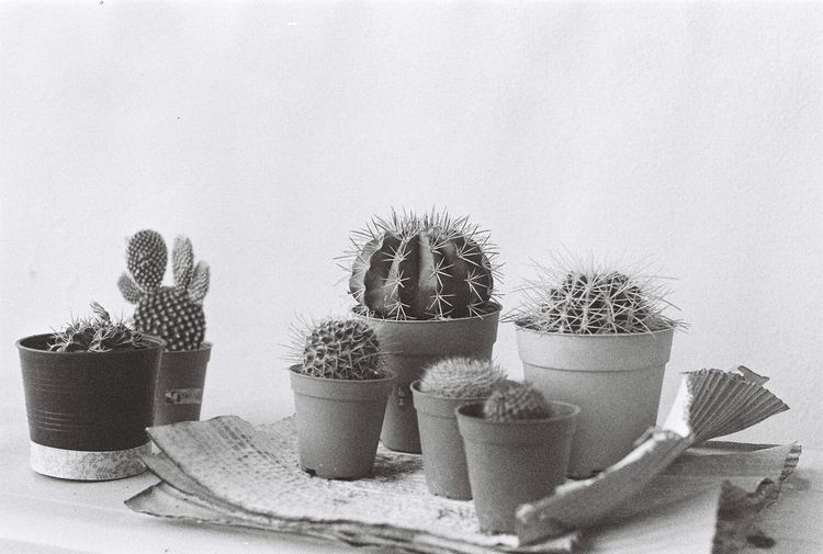 Cactus 35mm Film Film Film Photography Backandwhite No People IlfordHP5plus Backandwhite Film