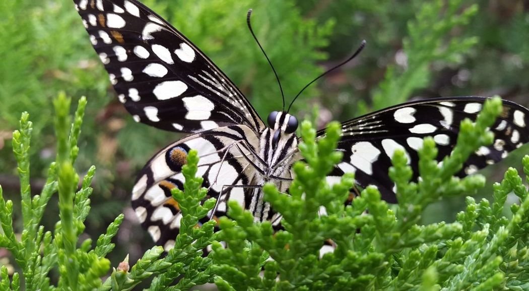 Butterfly - Insect Insect Animal Themes Animals In The Wild Animal Markings Animal Wing Nature One Animal Spotted Butterfly Plant Animal Wildlife Close-up Green Color Leaf Outdoors Growth No People Day Full Length