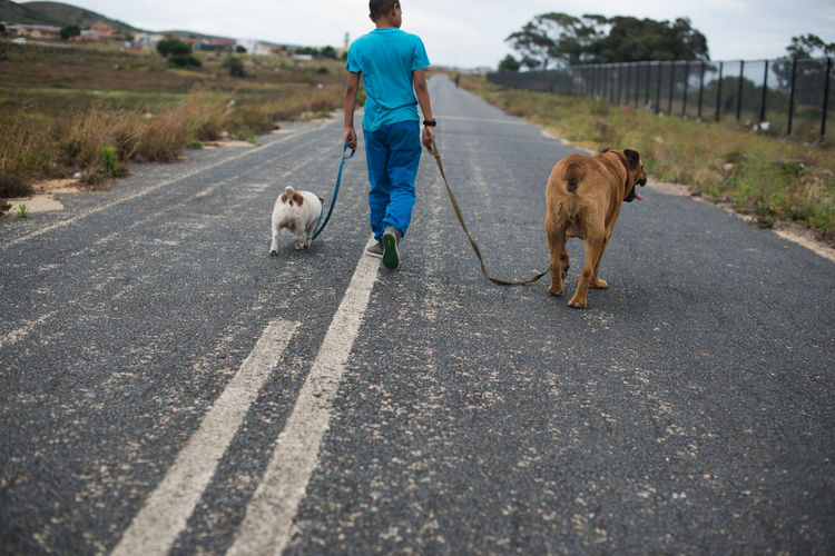 Walking the fellas Casual Clothing Day Dog Domestic Animals Mammal Outdoors Pets Rear View Road Road Marking Street The Way Forward Walking Walking The Dog