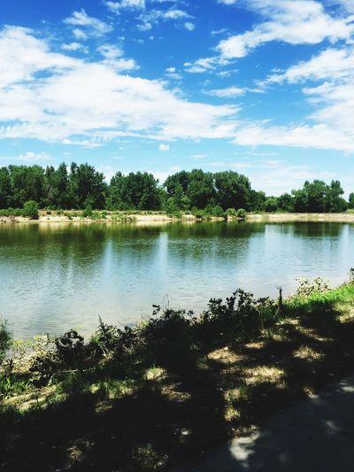 River Nature Grass