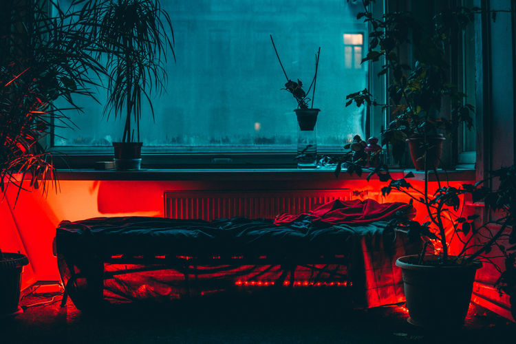 Empty bed and potted plants in illuminated room