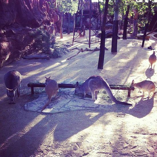 My perception to kangaroos is somehow different..... Kangaroo Sydney