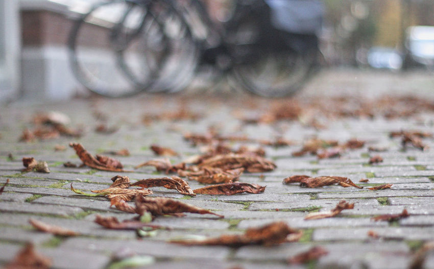 Fallen leaves on the street Autumn Bicycle Change Day Dry Fallen Fragility Land Vehicle Leaves Nature Outdoors Selective Focus Street Transportation