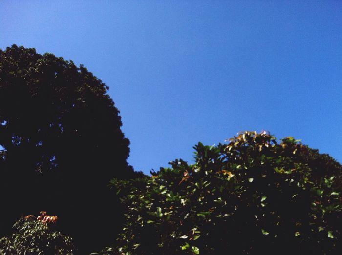 Sky blue???