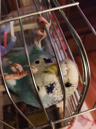 Crazybird Hello World Photolove Sweet♡ Mybird Goodnight