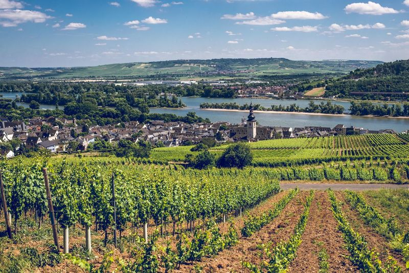 A summer walk on the Rheinsteig Rhein Agriculture Beauty In Nature Cloud - Sky Crop  Day Field Germany Growth Landscape Mountain Nature No People Outdoors Rheinsteig River Rural Scene Rüdesheim Scenics Sky Tranquil Scene Tranquility Tree Vineyard Winemaking The Great Outdoors - 2018 EyeEm Awards The Traveler - 2018 EyeEm Awards