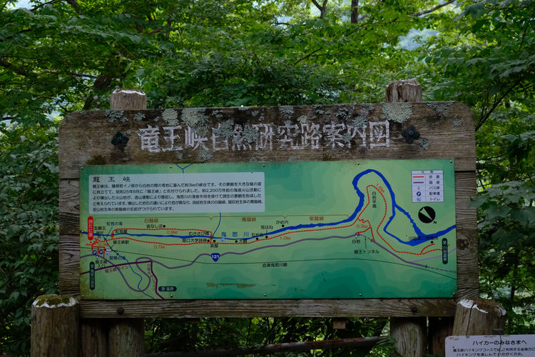Close-up Communication Day Forest Graffiti Green Color Growth Information Message Multi Colored Nature No People Non-western Script Outdoors Plant Script Sign Text Tree Western Script Wood - Material