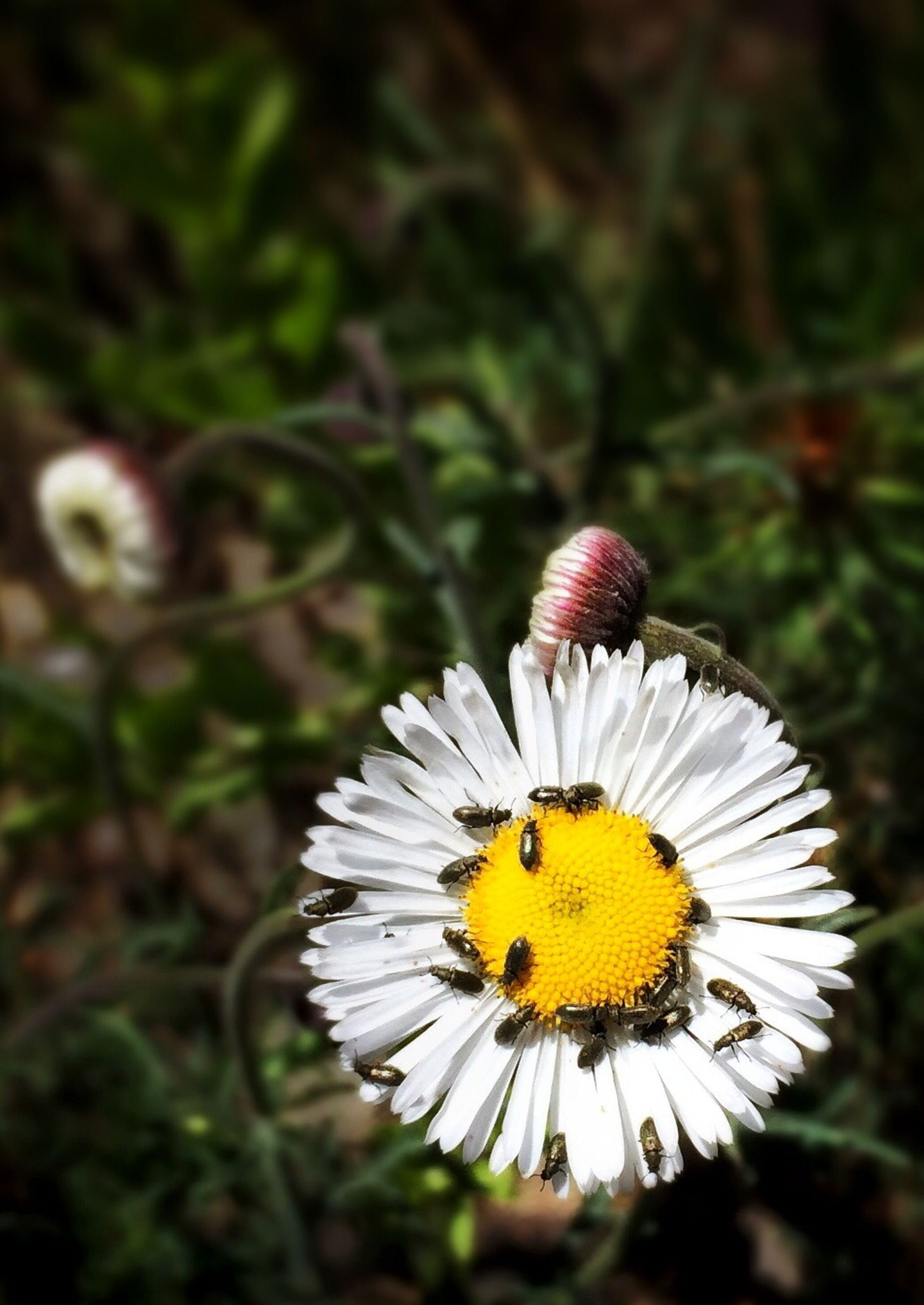 flower, yellow, insect, animals in the wild, petal, animal themes, one animal, flower head, fragility, freshness, wildlife, pollination, focus on foreground, close-up, butterfly - insect, beauty in nature, growth, symbiotic relationship, nature, pollen