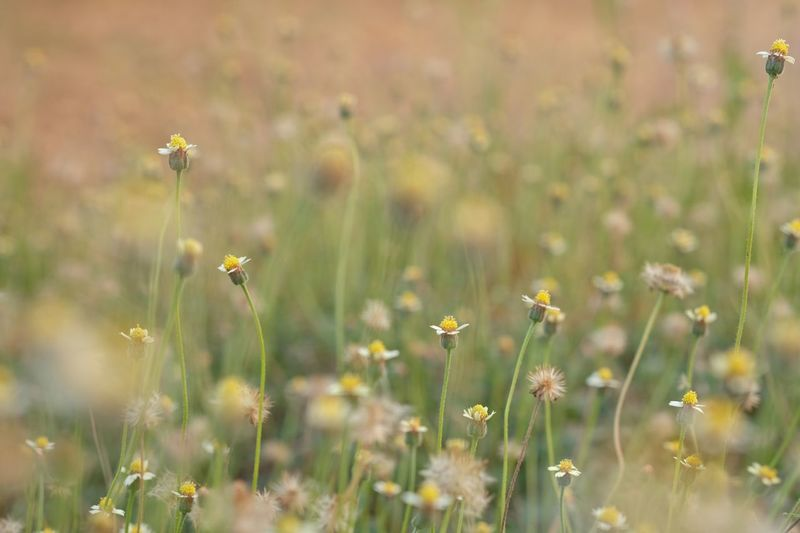 Wayside Flowers Flower Flowering Plant Plant Growth Fragility Field Freshness Beauty In Nature Petal Vulnerability  Land Nature No People Yellow Close-up Invertebrate Selective Focus Flower Head Animal Animal Themes