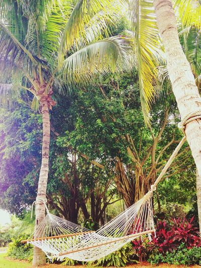 Palm Trees Hammock Summertime EyeEm Nature Lover Florida Bonita Springs United States