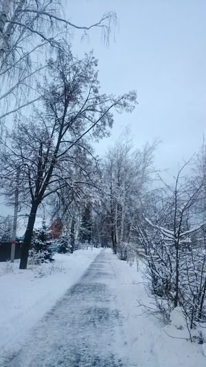 Tree Winter Snow Cold TemperatureSnowing Scenics Tranquility Day Bare Tree Branch Outdoors Nature зима снег❄ белый The Way Forward Sky Beauty In Nature Winter Trees Winter_collection No People дерево
