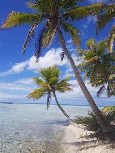 Beach Tree Sea Nature Beauty In Nature Sand Sky Blue Landscape Water No People Tranquility Cloud - Sky Travel Destinations Beauty In Nature Vacations Mer Turquoise Colored Tropical Climate Tourism French Polynesia Island Tree Coconut Palm Tree Palm Tree