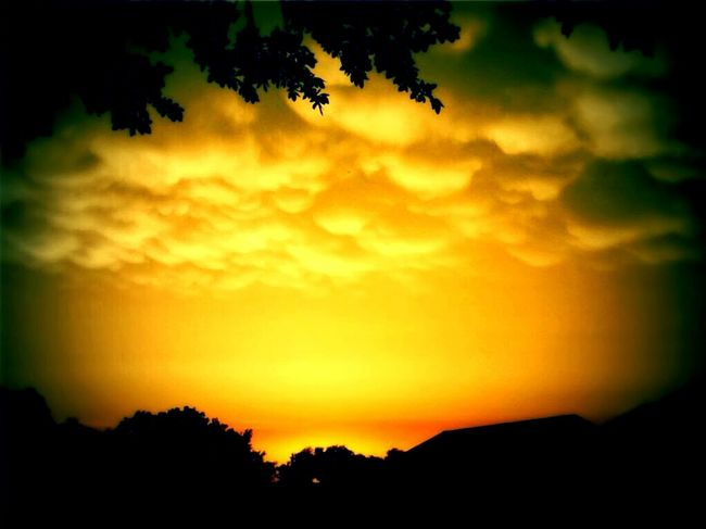 After The Storm. Sunset Nature Tree Beauty In Nature Sky Yellow Silhouette Vibrant Color Dramatic Sky Cloud - Sky Scenics No People Forest Outdoors Multi Colored Landscape Tranquility Photography Blissful Moments Nature Photography Nature Collection Beauty In Nature Phone Photography Texas Skies Trees