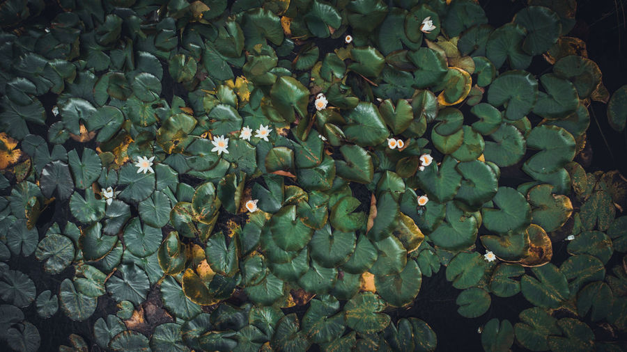 Aerial Shot Nature Photography Aerial Landscape Aerial Photography Aerial View Aerialphotography Landscape Nature No People