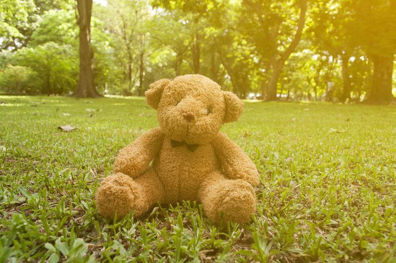 Teddy Bear On Grass In Park