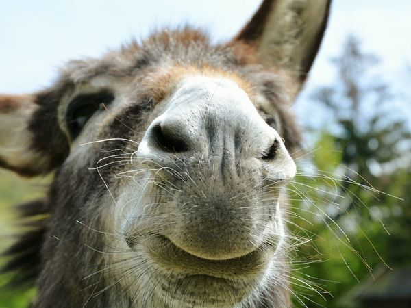 Donkey Beauty Face Grimace Snoot Funny Faces FUNNY ANIMALS Different Points Of View Another Angle Another View Depth Of Field Focus On Foreground Animals Animal Themes Hairy  Sexylips Point Of View The Great Outdoors - 2017 EyeEm Awards The Portraitist - 2017 EyeEm Awards