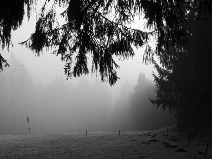 Nebellandschaft Beauty In Nature Branch Cold Temperature Day Fog Growth Hazy  Landscape Nature No People Outdoors Scenics Sky Tranquil Scene Tranquility Tree Tree Trunk Winter Winterliche
