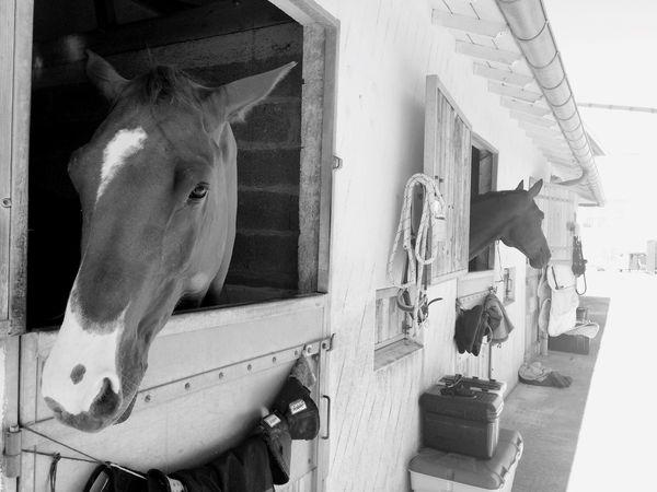 Horse Riding Animals Cheval Hello World Beautiful Taking Photos Enjoying Life Holiday France