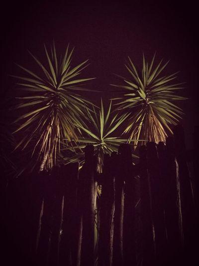 Sky Night No People trees