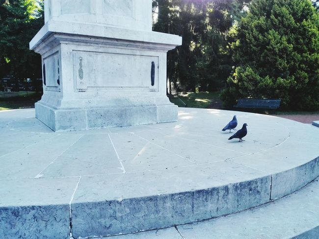 Adapted To The City Forest City City Life Building Exterior Tranquility Travel Destinations Sculpture Birds🐦⛅ pigeon Buenos Aires, Argentina  Carlosthays