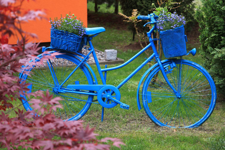 Blue painted bicycle is for decoration in the backyard Backyard Painted Absence Basket Bicycle Blue Day Decoration Flower Garden Grass Metal Mode Of Transportation Nature No People Outdoors Plant Selective Focus Transportation Wheel
