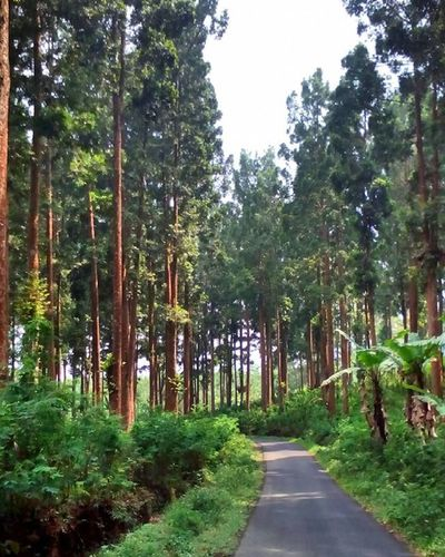 Enjoy this place... Forest Nature Eastjava INDONESIA
