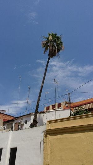 Sunshine Palm Trees València Historical Building Enjoying The Sun Relaxing Traveling Travel Nofilter Travel Photography
