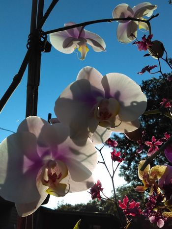 Hanging Out Freshflowers Sky Enjoying Life Orchidporn Spring Flowers Spring Bloom Flowers Orchids! Nature Photography Fresh Flowers Orchid Blossoms Enjoying Life Sky_collection Relaxing Cheese! Orchids Garden Spring Blooms Orchid Flower Orchidslover Nature Taking Photos That's Me Taking Photos Orchids