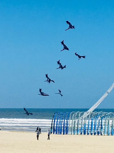 Kite festival. Berck Plage Witches Witch Kite Festival Kite Blue Sky Sky Beach Flying Sea Water Bird Land Sky Beach Flying Sea Water Bird Land Blue Horizon Over Water Nature Horizon Clear Sky