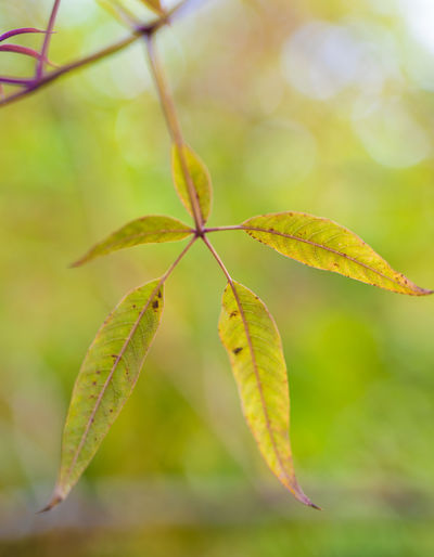 Close-up of plant leaf during autumn