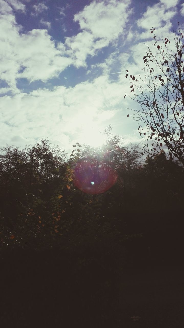 sky, nature, beauty in nature, tree, no people, sun, tranquility, cloud - sky, low angle view, outdoors, day, close-up