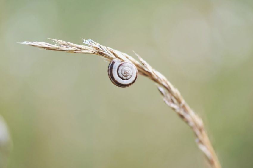 lazy morning Macro Photography Nature Photography Beauty In Nature My Place To Relax My Point Of View Hergershäuser Wiesen Green Color Snail Photography Snail Shell Macro Close-up Snail