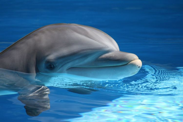 Animal Themes Animals In The Wild Aquatic Mammal Blue Close-up Day Dolphin Mammal Nature No People Outdoors Sea Swimming Swimming Pool Water Waterfront
