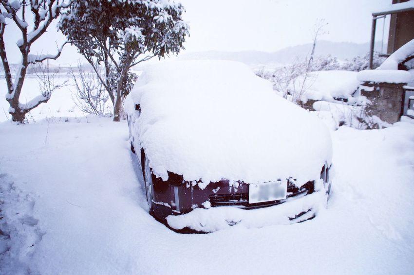 3日だったっけかな? Zが雪見だいふく。 雪見だいふく Premium Mistic Maroon Fairlady Z Nissan Snow