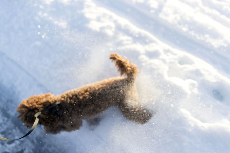 High angle view of dog on snow field