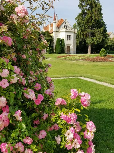 UNESCO World Heritage Site Serene Garden Garden Photography Rose Bush Park - Man Made Space Czech It Out Europe Flower Tree Pink Color Flower Head Architecture Building Exterior Grass Built Structure Blooming In Bloom Plant Life