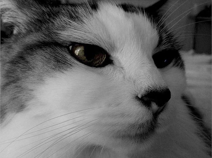 Cats EyeEm Best Shots - My World Black And White EyeEm Best Shots