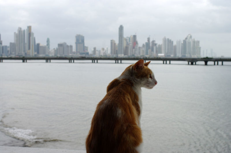 Cat looking away on city against sky