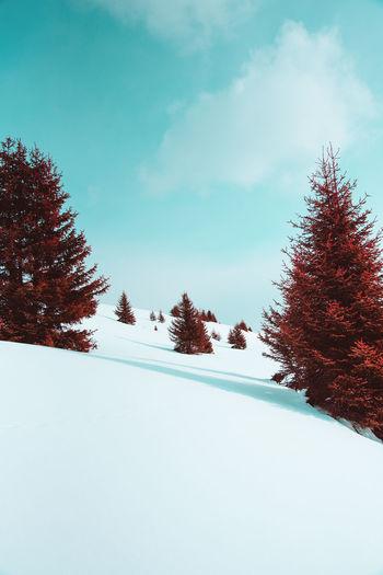 Bizarro world Surreal Surrealism Bizarro Tree Snow Cold Temperature Mountain Winter Forest Pine Tree Sky Landscape Deep Snow