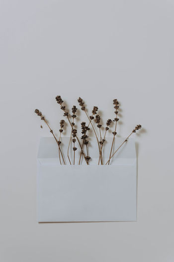 Close-up of wilted flowers in envelope against white background