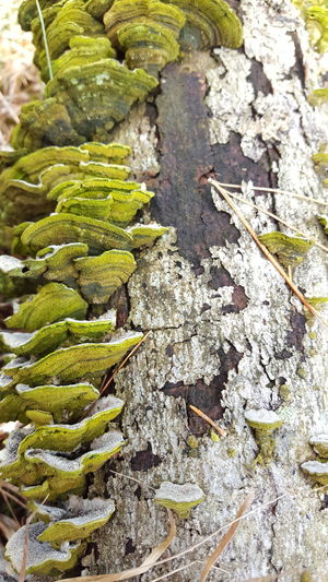 Old fallen tree trunk after a wind storm. Close-up Nature Trees Bark Texture Beauty In Nature Adirondacks Backgrounds Rejuvenation Simplicity Green Color Random Beauty Fallen Tree