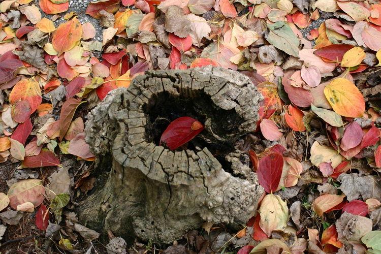 Senzafiltro Natural Naturale Nofilters Natura Autunno  Fall Tronco Buco Foglie Leaves EyeEmNewHere